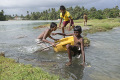 Water fun (Photosightfaces) Tags: water fun playing boys kids play joy sri lanka lankan srilanka srilankan hikkaduwa waterway cow scrambling