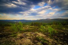 Norwegian delight (PixPep) Tags: tynset norge norway landscape dof depthoffield pixpep