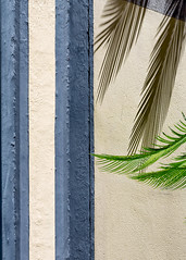 nature in harmony (amy spada) Tags: shadow green architecture palm
