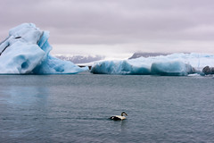 Jkulsrln (Ricardo Martinez Fotografia) Tags: d810 europa nikon ricardomartinez islandia jkulsrln lago lake hielo ice glacier