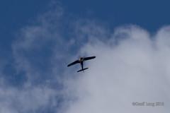 Vought F4U Corsair-26 (Clubber_Lang) Tags: airshow corsair farnborough f4u vought fia2016