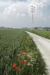 DSC_0603 (Frie Van Grunderbeeck) Tags: belgium belgi vlaamsbrabant hageland outdoor landschap landscape kerkom boutersem wolk cloud bloem flower poppy papaver klaproos pyloon elektriciteit electricity veld field graan corn grain