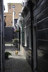 Marken2016-7054 (Jeannot56) Tags: nl nederland noordholland marken
