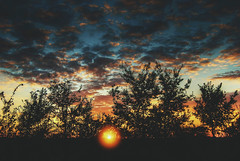 Zalazak (Sareni) Tags: sareni serbia srbija vojvodina banat juznibanat alibunar polje poljana livada field sun sunset sundows clouds sky nebo oblaci sunce zalazak vece evening senke silhouette colors boje vintage tree trees drvo drvece light svetlost sjaj summer leto july 2016 twop hdr highdynamicrange