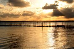 Dourado em Taipu de Dentro (Carlos Amorim (Camorim10)) Tags: dourado sunset entardecer taipu de dentro pennsula mara bahia brasil gua sol