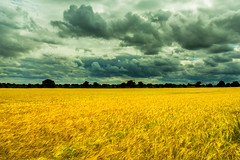 Heavy Clouds Building (iratebadger) Tags: nikon nikond7100 nikkor d7100 countryside country clouds cloudporn colours cornfield colors corn copmanthorpe dark distance england exploring field grain meadow moody darkskies rural nature lightroom iratebadger iso100 image outdoors outside