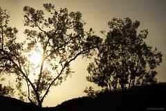 Outlines.... (Joe Hengel) Tags: missionviejo california evening eveninglight eveningskies goldenstate goldenhour socal southerncalifornia sunset orangecounty oc sky tree trees silhouette silhouettes ca outdoor nighttime nightskies