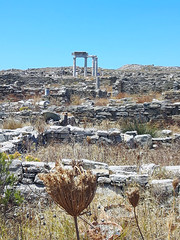 20160714_125834_low (Cinzia, aka microtip) Tags: delos cicladi grecia archeology antichit archaelogy island unescoworldheritagesite mithology sanctuary ancientgreece