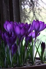 purple flowers (beddinginnreviews) Tags: beddinginnreviews fashion reviewsbeddinginn woman style beautiful comfortable