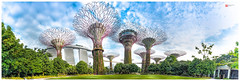 Gardens By The Bay - Supertree Grove (Brendan Chin) Tags: gardens by bay singapore supertree grove panorama brendanchinphotography scenery hdr fuji x100t parks