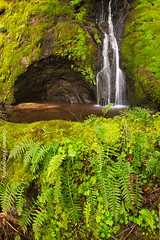 Finding the Flow (Jared Ropelato) Tags: california statepark fern green nature water northerncalifornia creek forest river outdoors photography waterfall moss spring stream natural hike trail coastal photograph mttam recreation tamalpais cataract 2015 mouttam jaredropelato ropelatophotography