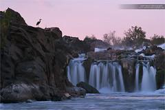 The Overlook (www.matthansenphotography.com) Tags: pink sunset color bird heron nature water animal waterfall wildlife rapids greatblueheron avian wadingbird matthansenphotography