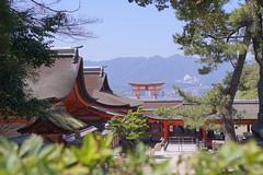 DSC04439 (hohyinloh) Tags: japan hiroshima