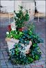 sidewalk vase (ChristianRock) Tags: nature garden georgia 50mm pentax manual manualfocus 50mmf14 rikenon ricoh50mmf14 kmount rikenon50mmf14 k20d pentaxk20d rikenonxr50mmf14