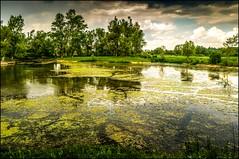 Etangs de Vraux, Champagne-Ardenne, France (Laurent Asselin) Tags: france eau champagne sony lac paysage etangs sonynexf3