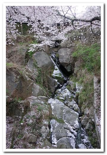 화개십리벚꽃길23