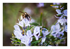 Bee Happy (Gabi Monnier) Tags: france canon jour printemps colline provencealpesctedazur roquefortlabdoule exterieur canon600d gabimonnier lesrouvires