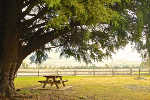 Tree ,table, fences