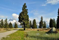 beautiful day (Dejan Bastijanic) Tags: trees sky italy mountain nature alberi clouds azzurro priroda montagna trentino dolomiti madonnadicampiglio planina ciello 5laghi malgaritorto parconaturaleadamelobrenta