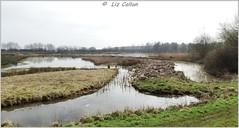 Wood Lane Nature Reserve Shropshire 050415 (Liz Callan) Tags: naturereserve lapwing spaniel woodlane ellesmere