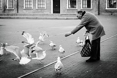 Hofplaats, Den Haag (ingehoogendoorn) Tags: blackandwhite zwartwit gull gulls streetphotography denhaag feedingthebirds blacknwhite thehague meeuw meeuwen zeemeeuw zeemeeuwen birdsfeeding straatfotografie hofplaats vogelsvoeren