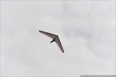 20130918_8945 (equinox.net) Tags: iso200 300mm f80 11600sec 70300mmf4556