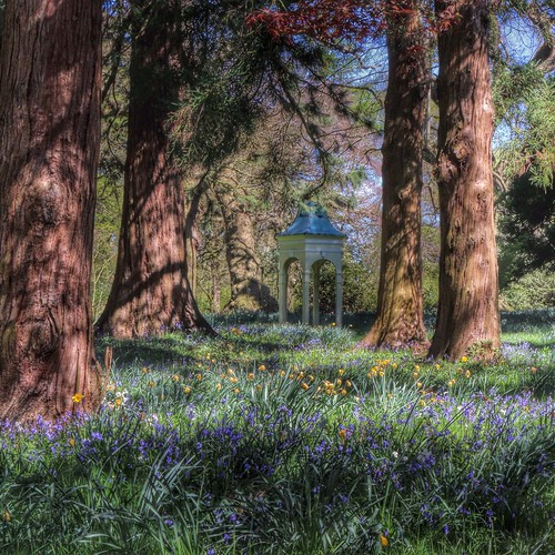 The Bluebell Woods at Capesthorne Hall, Cheshire