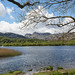 Elterwater and the Langdale Pikes.