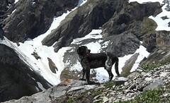 Mastik (bulbocode909) Tags: nature bleu neige printemps chiens montagnes