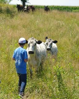 Friendly Happy Cows