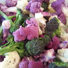 Colorful broccoli from our CSA!