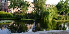 DSCF1316.jpg (amsfrank) Tags: amsterdam oost people candid summer sunshine