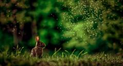 Majik (limebluphotography) Tags: landscape nature summer magic color love heat rabbit bunny animal officialblu limeblu nikon canon warm smell light shadow photography magnum explorethebruce natgeo magnumphotos