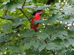 Pennsylvania '16 (faun070) Tags: longwoodgardens pennsylvania