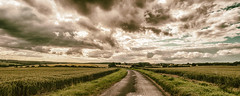 Road to Rudge ... July (HHH Honey) Tags: road summer clouds july crops wiltshire marlborough cloudscape froxfield sigma1735mmlens theroadtorudge googlenikcollection analogueefex 12monthsofthesameimage sonya7rii