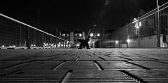 sense of wonder (keith midson) Tags: night fence bench evening track path seat walkway tasmania footpath launceston