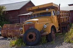 Volvo Titan (Burminordlicht) Tags: volvo volvotruck titan lkw kipper oldtruck scrapyard lastwagenbilder lastwagenfotos lorry truckphotos truckpics brummi classictruck classictrucks diesel