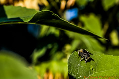 _MG_3900 Logo Small (Tim Elmer Photography) Tags: abejas