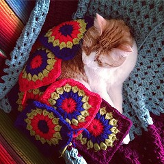 (Cherub3001) Tags: tom cat square ginger squares crochet squareformat blanket hudson granny iphoneography instagramapp