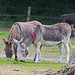 Island Farm Donkey Sanctuary, Oxfordshire