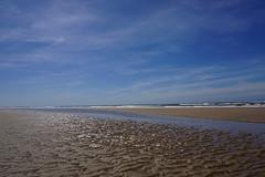 DSC00378 (Evert Bosdriesz) Tags: netherlands nederland castricum noordhollands duinreservaat