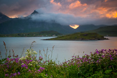 Lofoten (andreassofus) Tags: ocean travel flowers sunset sea summer seascape mountains nature water floral grass norway canon landscape evening summertime lofoten midnightsun lofotenislands travelphotography