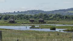 new riverside dwellings! (Wendy:) Tags: kilcoole cpl july huts dwellings marsh thevikings tv series
