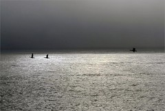 . (me*voil) Tags: cafiles pacific water sea minimal birds cormorants reflections ripples waves