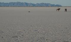 "No ""World Land Speed Record"" photoshoot. (Alvin Harp) Tags: horse mountains nature utah photoshoot desert salt july barren 2016 naturesbeauty bonnevillesaltflats barrenlandscape teamsony sonyilce6000 fe24240mm alvinharp"