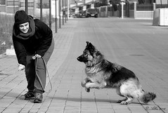 Entrenamiento, El amigo del hombre... (Alberto Fer.) Tags: pastor aleman perro dog can entrenamiento carrera blancoynegro pose correr nikon 5100 salto