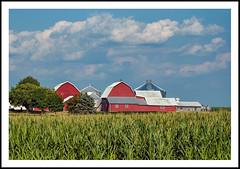 Red Barns Beyond the Cornfield (sjb4photos) Tags: ohio wauseon farm redbarns cornfield greatshot