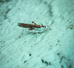 Grasshopper (Rodosaw) Tags: street chicago art photography graffiti culture documentation subculture of