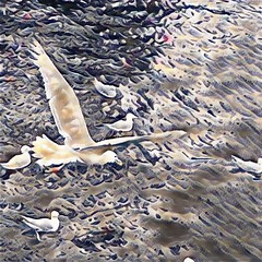 Mine mine mine (gnapspic) Tags: seagulls puget ferry whidbey island