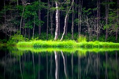 Emission (tez-guitar) Tags: water pond reflection wood tree summer forest highland nagano pentax pentaxart